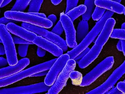 e._coli_image