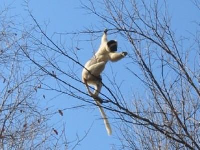 Wildlife in Northern Madagascar