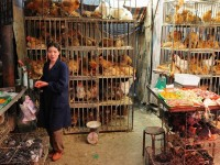Chicken Market in Xining, China