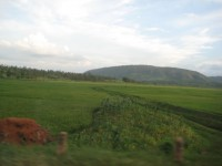 Rice paddies between Rwinkwavu and Kirehe district, Rwanda