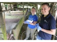 Sarah and Laura Getting Pig Samples