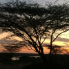 Prudhomme-O'Meara's team visited Turkana, in northern Kenya, in 2019, to collaborate with colleagues at Turkana Basin Institute, where they slept under the stars and woke to this sunrise one morning. (Photo courtesy of Wendy Prudhomme-O'Meara).